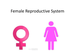 Female Reproductive System Notes