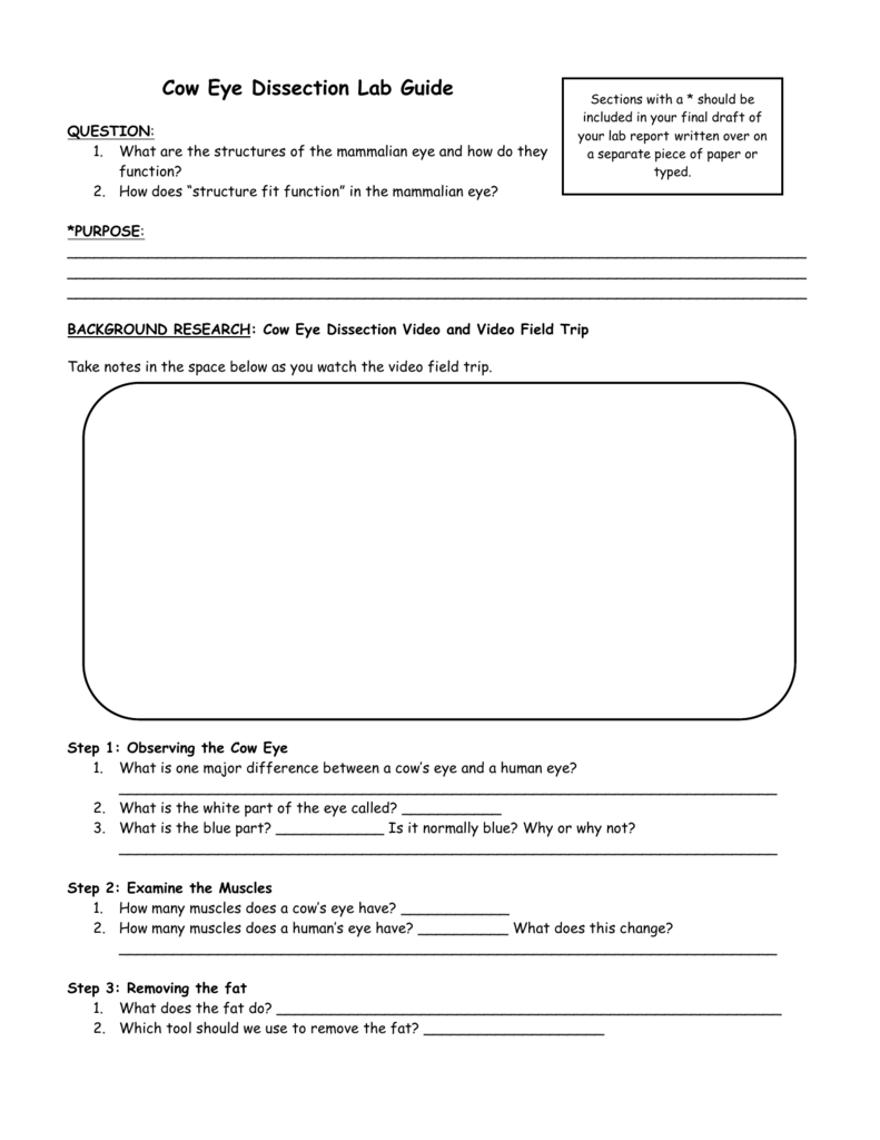Step 1 Observing the Cow Eye – Eye Dissection Worksheet