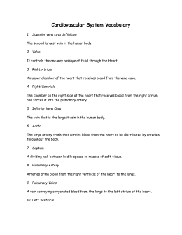 1: CIRCULATORY SYSTEM WORKSHEET