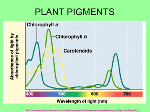 plant pigments - Local.brookings.k12.sd.us