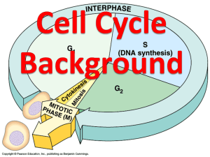Cell Cycle Background