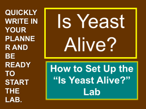 "How to Set Up the ""Is Yeast Alive?"""