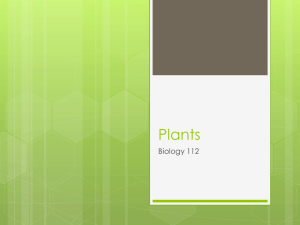 introduction_to_plants