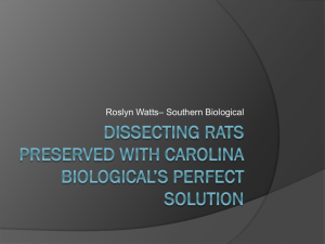 Dissecting Rats Preserved With Carolina Biological*s Perfect Solution