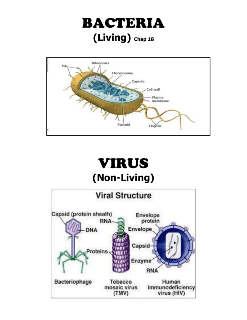 Bacteriavirus booklet pooptronica Image collections