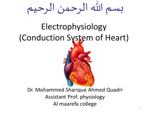 Electrical Activity of Heart