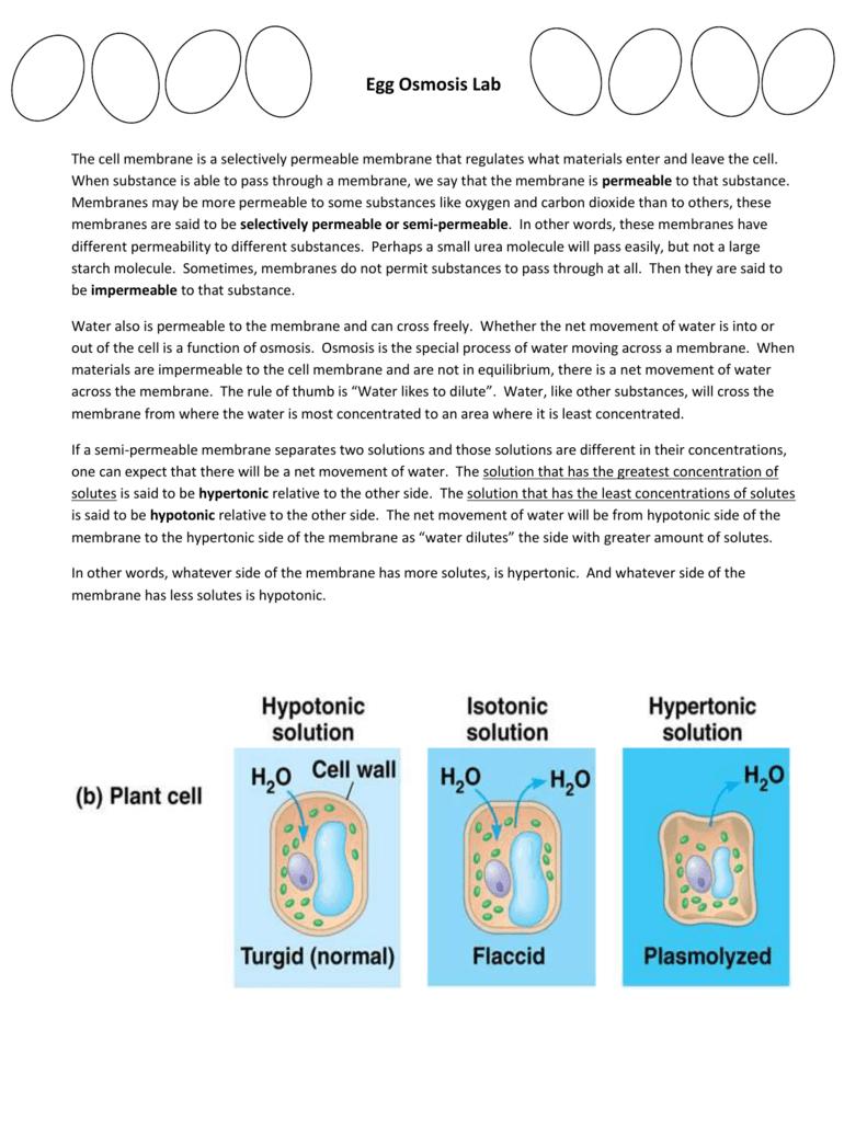 Egg Osmosis Lab Student Data Worksheet – Hypertonic Hypotonic Isotonic Worksheet