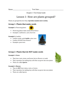 Group 1- Plants that make seeds