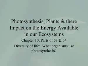 Photosynthesis and Plants