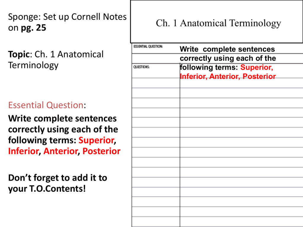 Worksheets Anatomical Terminology Worksheet anatomical terminology