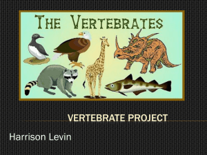 Vertebrate Project - carterbiology2-12-1809