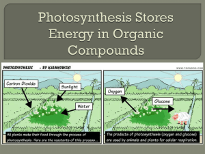 Photosynthesis Stores Energy in Organic Compounds