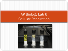 Lab 6 Quiz – Respiration