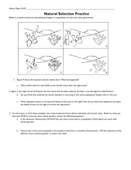 Natural selection worksheet 1 - Summer Research Program for