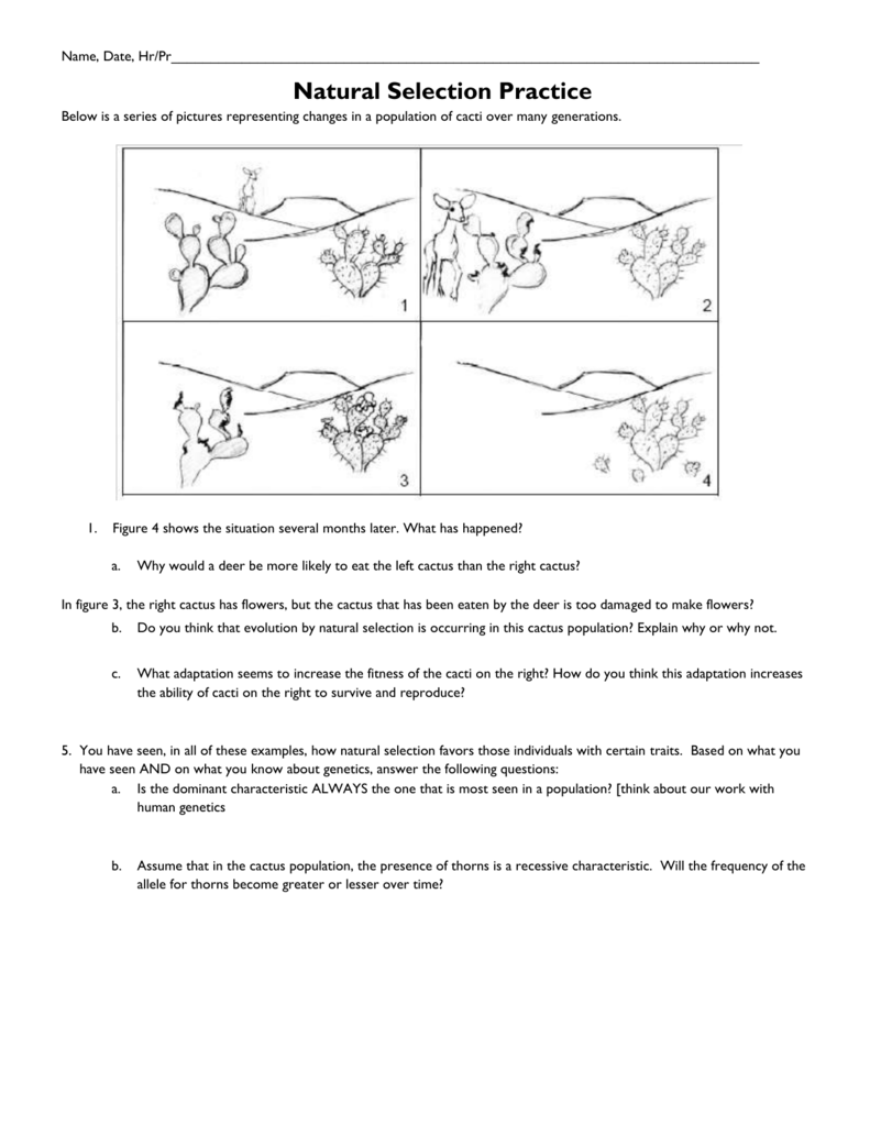 Evolution And Natural Selection Worksheet - Nidecmege