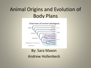 Animal Origins and Evolution of Body Plans