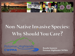 What qualities make species invasive?