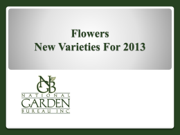 2013 AAS Winner - National Garden Bureau