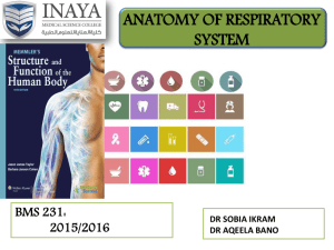 The Respiratory System Basic functions of the respiratory system