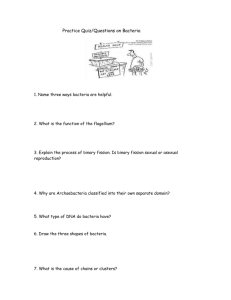 Practice Quiz on Bacteria - Varga