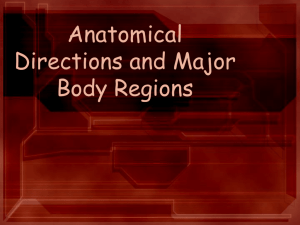 Anatomical Directions and Major Body Regions