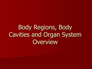 Body Regions, Body Cavities and Organ System Overview