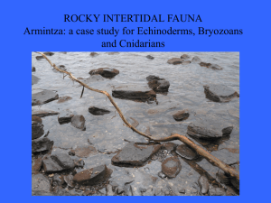 ROCKY INTERTIDAL FAUNA Armintza: a case study for