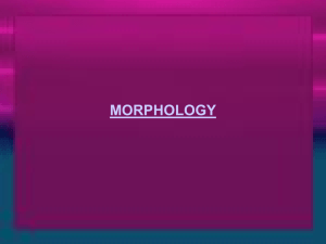 Morphology: the word of language