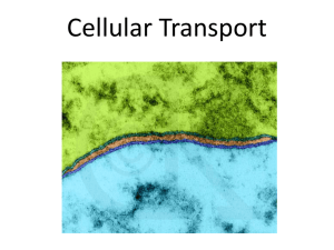 Cellular Transport - stephaniemcoggins