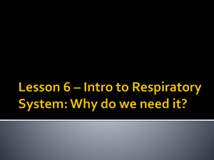 Lesson 6 Intro Respiratory System