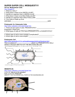 Worksheets Cells Animal Cell Diagram Worksheet Printable