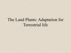 The Land Plants: Adaptation for Terrestrial life