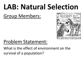 APES Natural Selection Lab Report Format