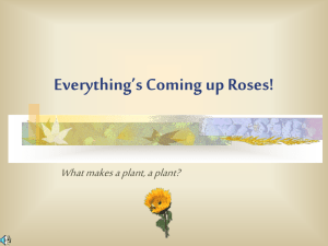 Everything's Coming up Roses! - Etiwanda E