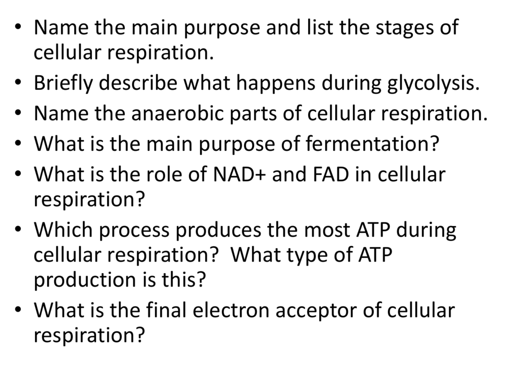 what stage of cellular respiration yields the most atp