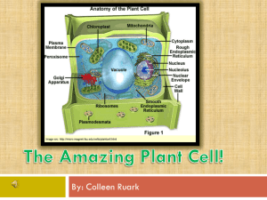File - Animal and Plant Cells