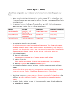 Muscles Worksheet answers