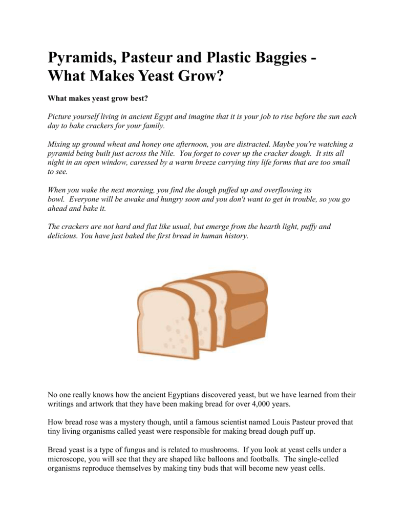 What Makes Yeast Grow Lab