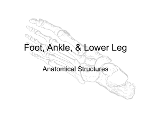 Foot, Ankle, & Lower Leg - Liberty Union High School District
