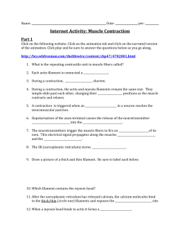Muscle Contraction Internet Activity