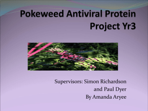 Pokeweed Antiviral Project - POKEWEED-ANTIVIRAL