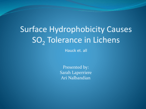Surface Hydrophobicity Causes SO2 Tolerance in Lichens
