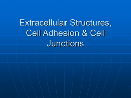 Extracellular Structures, Cell Adhesion & Cell Junctions