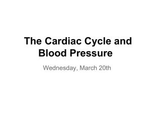 The Cardiac Cycle and Blood Pressure - Ms. Giovanetto