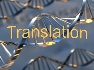 Translation ppt