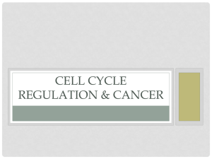 Cell Cycle Regulation and Cancer Lecture
