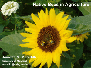 Native Bees in Agriculture - Sustainable Agriculture Research and