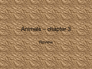 Animals – chapter 3