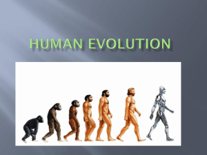 Human Evolution Power Point 2014
