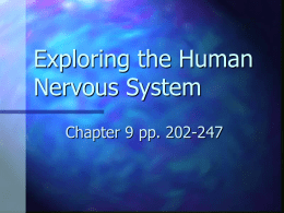 Exploring the Human Nervous System